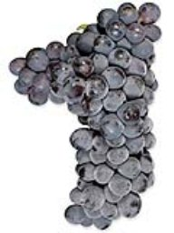 Sangiovese (Amador) (36lb RPC)