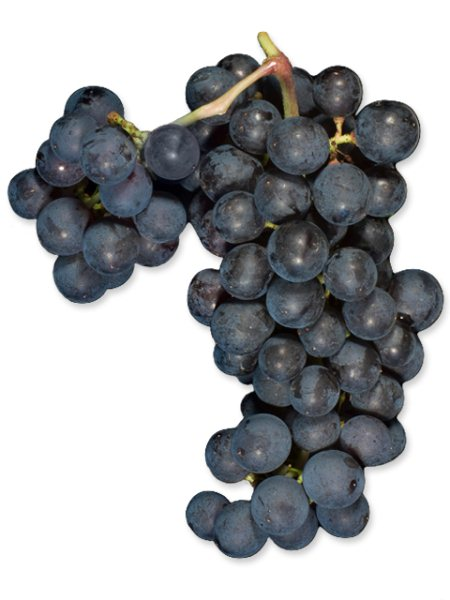 Syrah (Lanza Vineyards) (36lb)