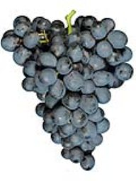 Iron Oak - Potter Valley Merlot (36lb)