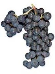 Cabernet Sauvignon (Lanza Vineyards) (1 Ton)