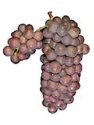 Pinot Grigio (Lanza Vineyards) (1 Ton)