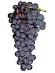 Syrah (Lanza Vineyards) (1 Ton)