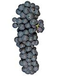 Zinfandel (Lanza Vineyards) (1 Ton)