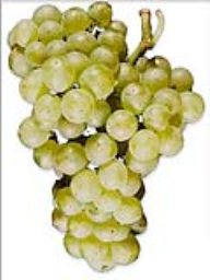 Chardonnay (Lanza Vineyards) (36lb)