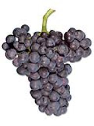 Grenache (Lanza Vineyards) (36lb)