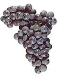 Malbec (Lanza Vineyards) (36lb)