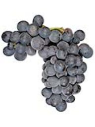 Napa Gamay (Lanza Vineyards) (36lb)