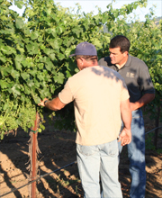 Lanza Vineyards Ron and Larry Lanza Tend Vines